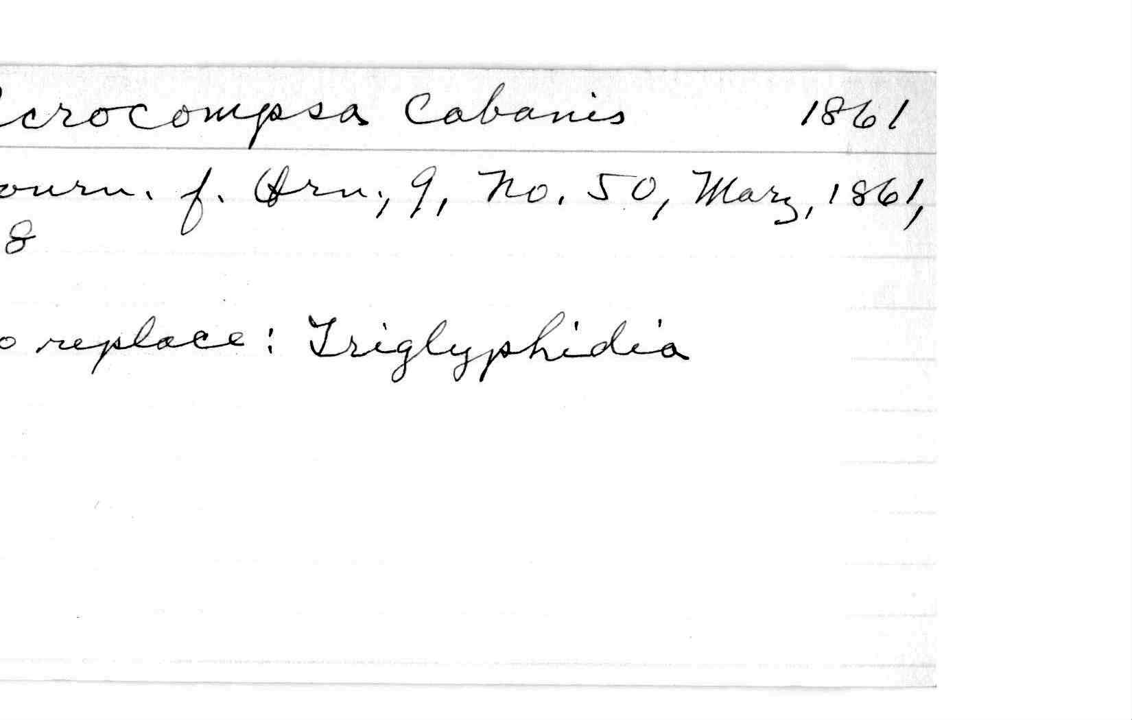 Richmond index genera aaptus zygodactyla acrocompsa hexwebz Gallery